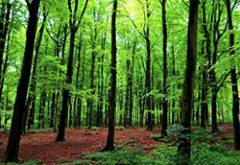 Danúbio Florestal